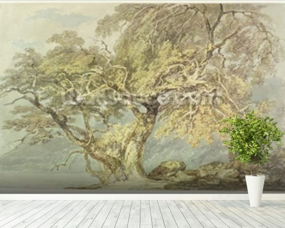 A Great Tree, c.1796 (w/c over graphite on paper) wallpaper mural room setting