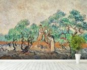 The Olive Grove, 1889 (oil on canvas) wallpaper mural in-room view