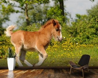 Spring Foal mural wallpaper