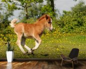 Spring Foal mural wallpaper kitchen preview