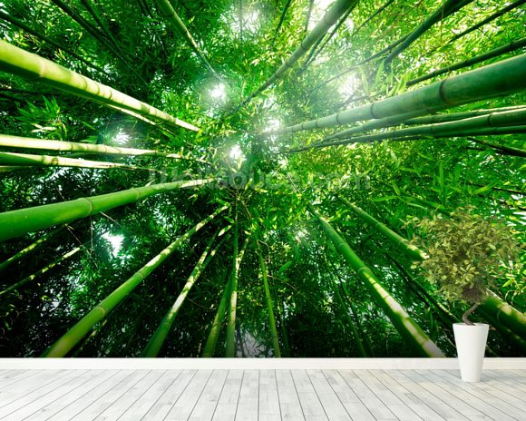 Bamboo forest wallpaper wall mural wallsauce australia for Bamboo forest mural