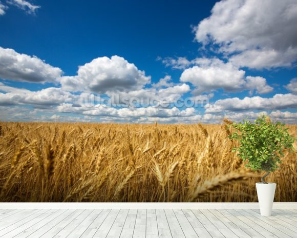 Wheat Field wallpaper mural room setting