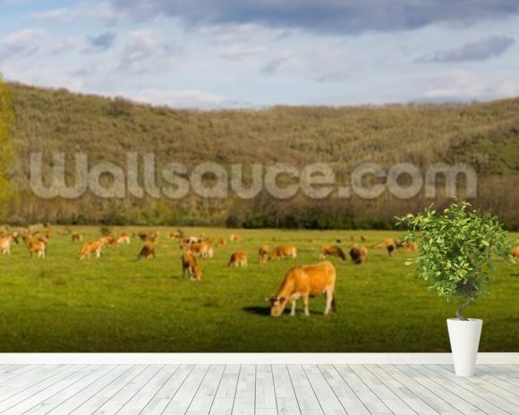 Brown Cows, Panoramic mural wallpaper room setting