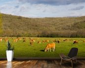 Brown Cows, Panoramic mural wallpaper kitchen preview