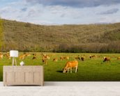 Brown Cows, Panoramic mural wallpaper living room preview