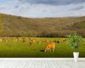 Brown Cows, Panoramic mural wallpaper in-room view
