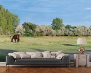 Field of Horses Panoramic wall mural
