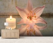 Candle and Lilly wallpaper mural living room preview