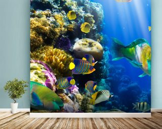 Good Coral Colony And Coral Fish Mural Wallpaper Part 29