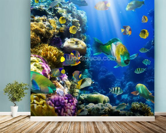 Coral Colony and Coral Fish mural wallpaper room setting