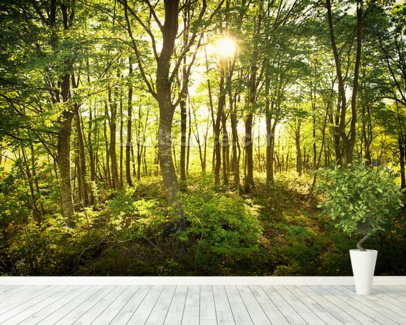 Enchanted Woodland Wallpaper Wall Mural | Wallsauce Norway