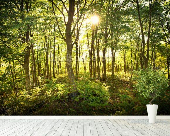 Enchanted woodland wallpaper wall mural wallsauce usa for Enchanted forest mural wallpaper
