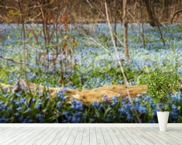 Spring Forest Flower Panoramic mural wallpaper room setting