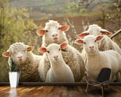 Sheep on Pasture mural wallpaper kitchen preview