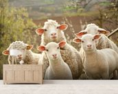 Sheep on Pasture mural wallpaper living room preview