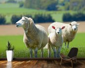 Sheep wall mural kitchen preview
