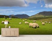 Sheep Grazing wallpaper mural living room preview