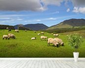 Sheep Grazing wallpaper mural in-room view