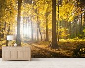 Bright Forest Sunlight wall mural living room preview