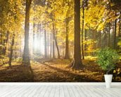 Bright Forest Sunlight wall mural in-room view