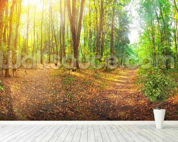Sunny Day Forest Panorama wallpaper mural room setting