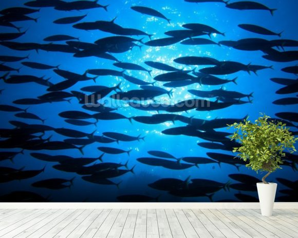 School of Fish wallpaper mural room setting