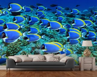 Surgeon Fish Wall Mural Wallpaper Wall Murals Wallpaper