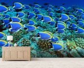 Surgeon Fish mural wallpaper living room preview