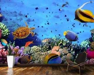 Coral Colony on a Reef Wallpaper Mural Wall Murals Wallpaper