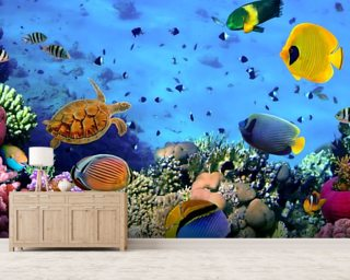 Charming Photo Of A Coral Colony Mural Wallpaper Part 15