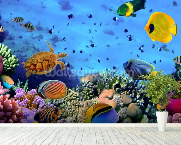 Photo of a Coral Colony mural wallpaper room setting