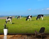 Devon Cows mural wallpaper kitchen preview