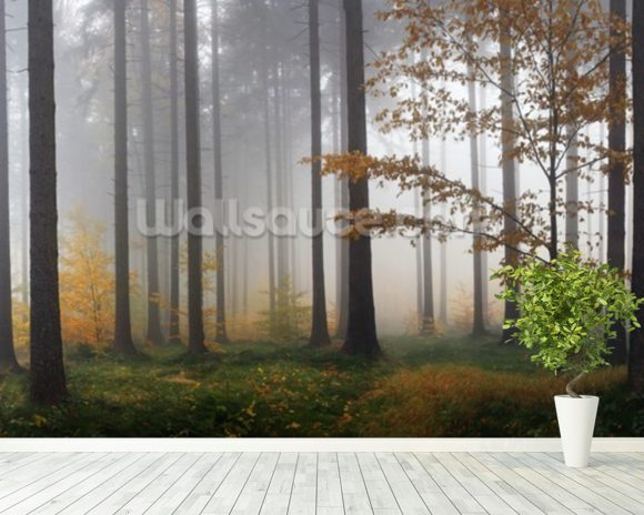 Misty Autumn Forest wall mural room setting