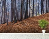 Homolje Mountains Autumn Woodland wall mural in-room view