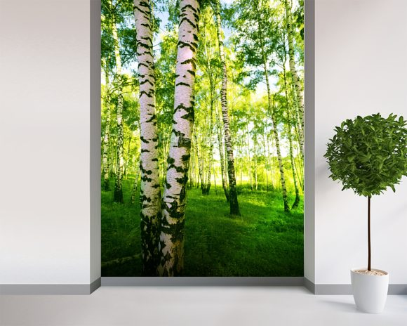 Birch Woodland wallpaper mural room setting