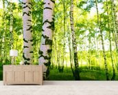 Birch Woodland wallpaper mural living room preview