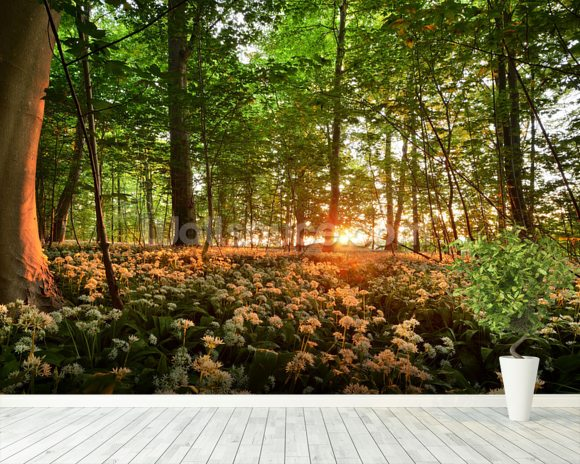 Sunlight Glow over Forest Flowers wallpaper mural room setting