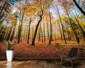 Autumn Trees wallpaper mural kitchen preview