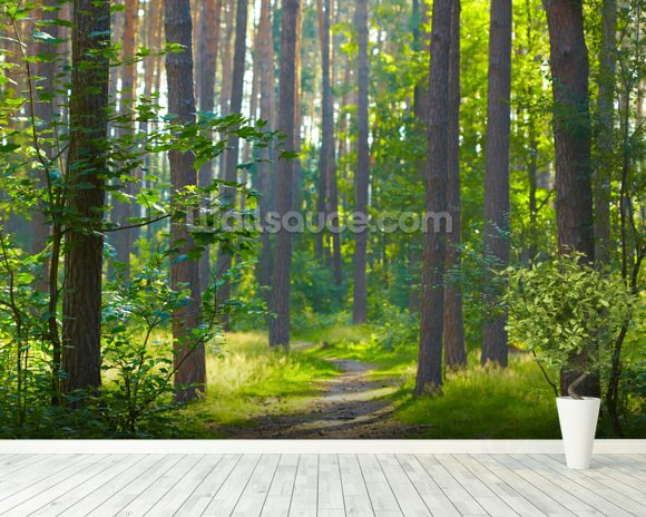 Forest sunrise mural wallpaper room setting