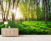 Spring Woodland Edge wall mural living room preview