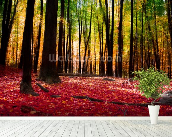 Colourful autumn forest wallpaper wall mural wallsauce for Autumn forest wallpaper mural