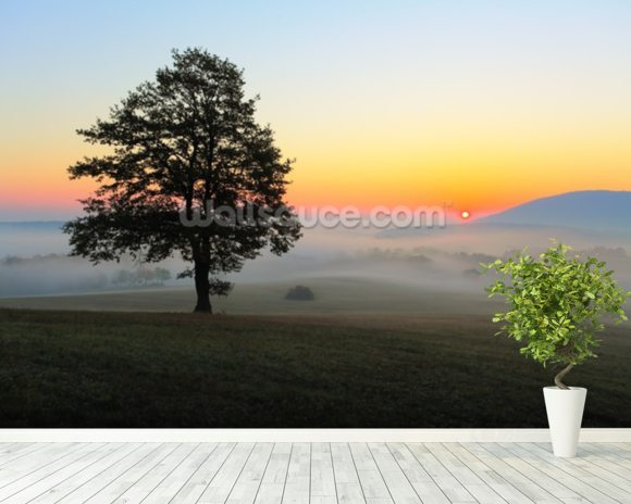 Tree Sunset mural wallpaper room setting