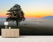 Tree Sunset mural wallpaper living room preview