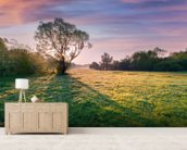 Tree at Dawn mural wallpaper living room preview