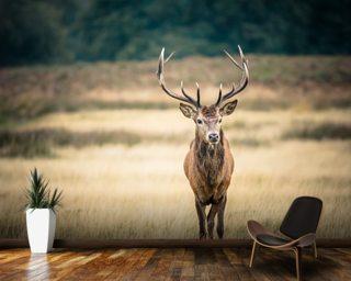 Stag Wallpaper Deer Wallpaper Wallsauce USA