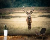Red Deer mural wallpaper kitchen preview