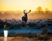 Red Deer Sunrise wall mural kitchen preview