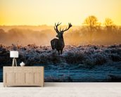 Red Deer Sunrise wall mural living room preview