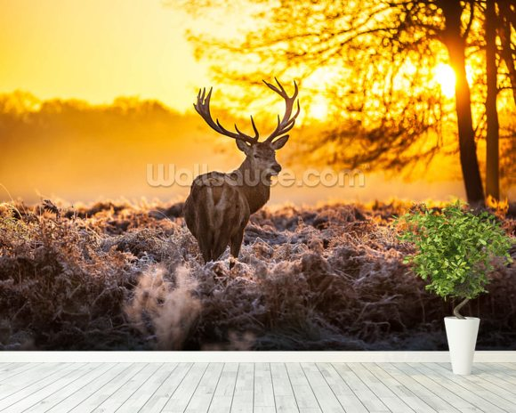Stunning red deer in morning sun wallpaper wall mural for Deer wallpaper mural