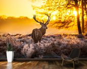 Red deer in morning sun wallpaper mural kitchen preview